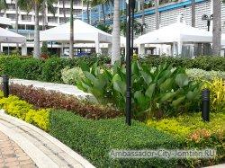 Фотогалерея Ambassador City Marina Tower Wing 3*: еще клумбы у выхода к бассейну из отеля