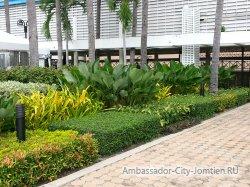 Фотогалерея Ambassador City Marina Tower Wing 3*: клумбы у выхода к бассейну из отеля