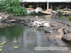 Фотогалерея отеля Ambassador City Jomtien Ambassador Wing 2*: искусственный пруд