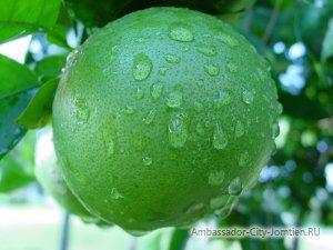 Фото Свити - экзотический фрукт в Тайланде