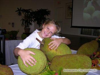 Хлебное дерево (джекфрут) достигает 35 кг в весе