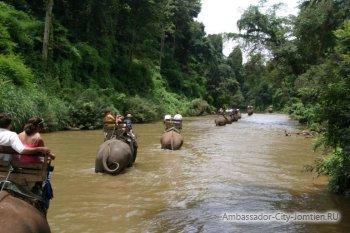 Экскурсия Прогулка на слонах во время сезона дождей в Тайланде