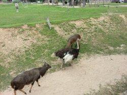 Кхао Кхео: в той же локации обитают другие крупные животные