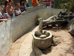 Кхао Кхео: это сурикаты, они любят есть червяков и фотографироваться