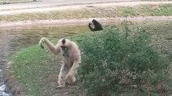 Кхао Кхео: обезьяна выпрашивает себе еду у туристов