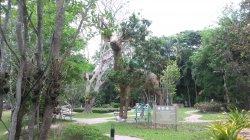 Кхао Кхео: этот жираф огромный! Потому что статуя!