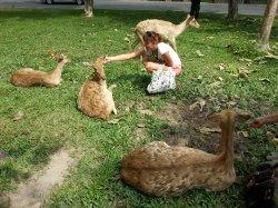 Кхао Кхео: добродушные олени, которых можно покормить, погладить или сфотографироваться с ними