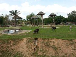 Кхао Кхео: вид на локацию, зоопарк огромен! Более 1200 акров!