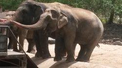 Кхао Кхео: слоны... ну какой зоопарк в Тайланде без них?