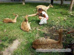 Открытый зоопарк Кхао Кхео в Паттайе (Тайланд)