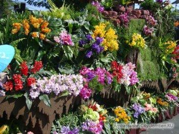 Почему говорят, что Тайланд - страна орхидей?