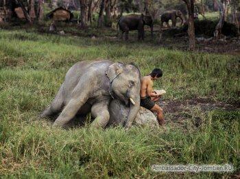 Почему считается, что Тайланд - страна слонов?