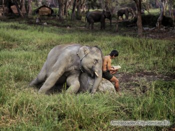 FAQ: Тайланд и слоны