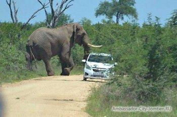 Нападение слонов на людей в Тайланде