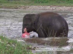 Слоненок бросился на помощь человеку