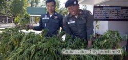 Тайские активисты требуют построить конопляную ферму