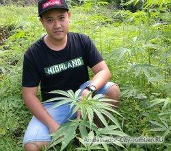 В Таиланде хотят построить конопляную ферму