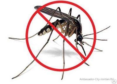 Комары (москиты) в Паттайе и борьба с ними