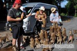 Туристов будут штрафовать за кормление обезьян